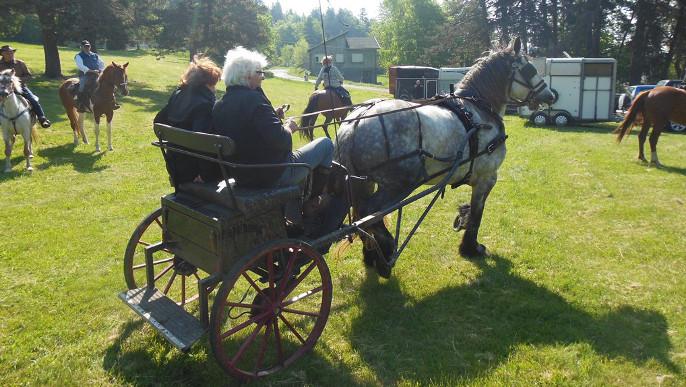 Actualités - Fête du cheval 18 et 19 juillet